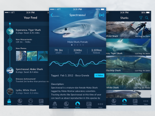 Shark-Tracker-iOS-App